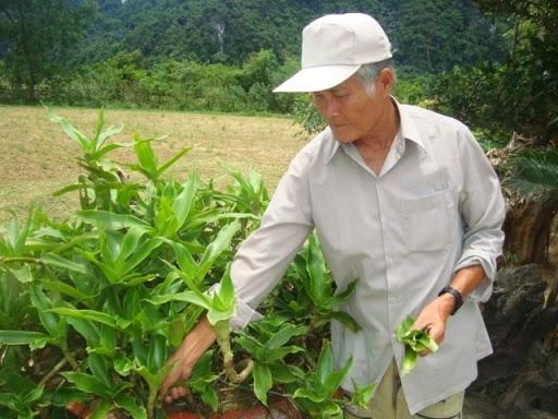 cụ Huỳnh Thị Năm sử dụng cây lược vàng