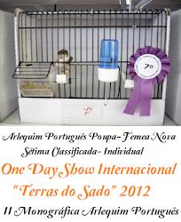 Arlequim Português Poupa Femea