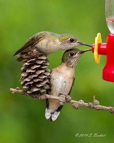 colibri-bebedero-feng-shui-siria-grandet