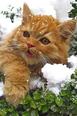 Cold catz