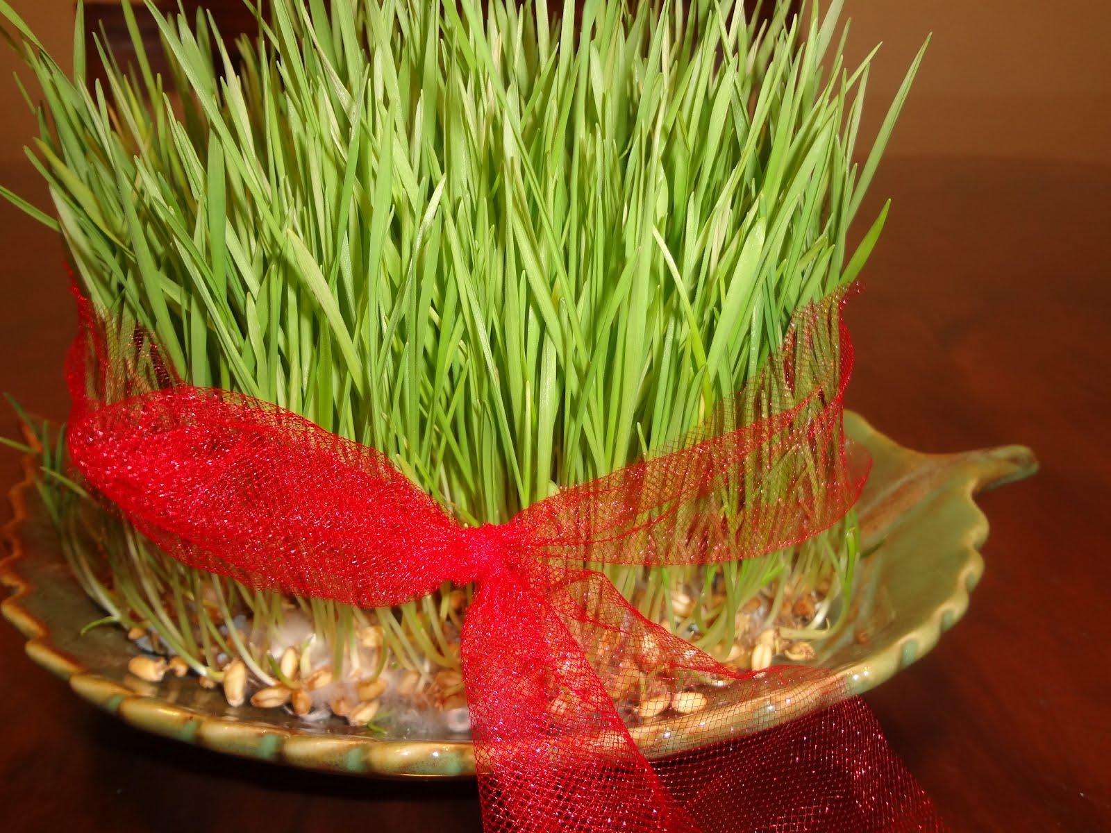 سبزه  شربتی میعادگاه زن كرد : April 2012