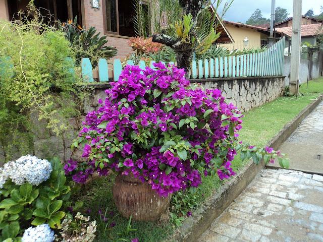 A tesoura cor de rosa primavera no outono for Bouganville in vaso
