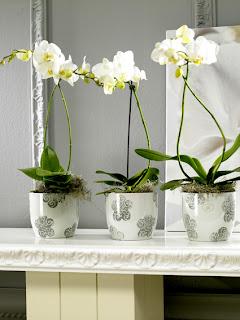 Matheus arquitetura designer plantas dentro de casa for Plantas para dentro de casa sombra