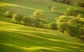 Green-Hills-Wallpapers