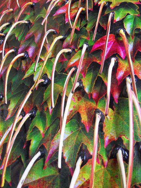 floraison automnale