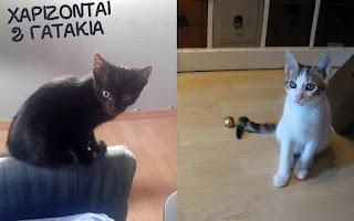 Χαρίζονται αυτα τα 2 υπερ-γλυκα γατακια!