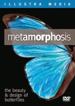 Watch Metamorphoisis The Beauty and Design Of Butterflies (2012)