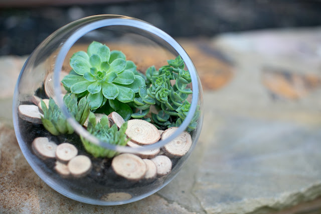 Accent Decor succulant and wood slice terrarium