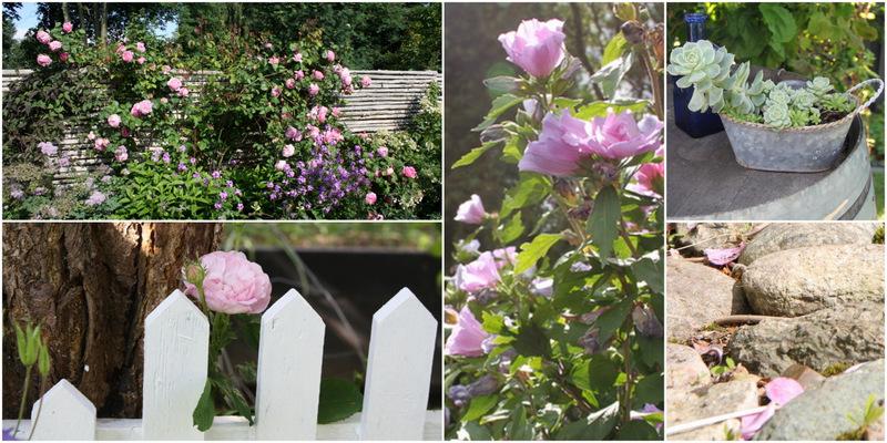 rosa villa blomst