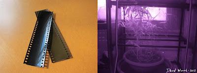 Infrared camera film