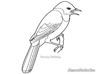 Mewarnai Gambar Burung Kutilang