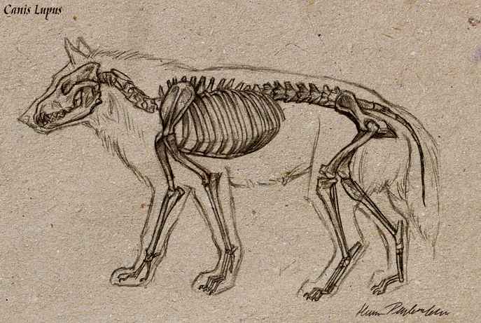 Graphite Dragons: Wolves