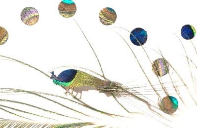 chris maynard, feather art - peacock