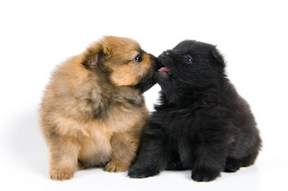Funny Dogs Kissing