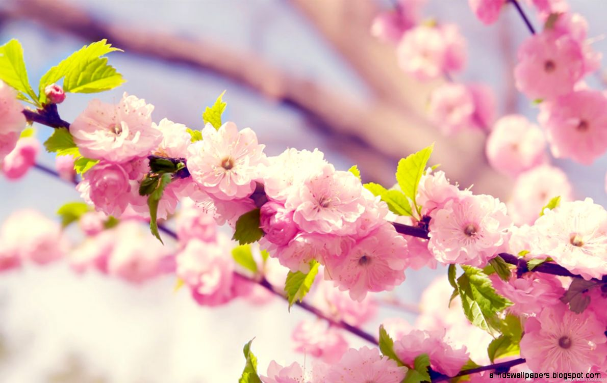 Spring flowers screensavers all hd wallpapers view original size spring flowers pictures mightylinksfo