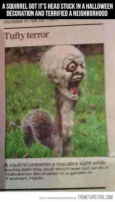 Yikes! Squirrel get caught in a mask