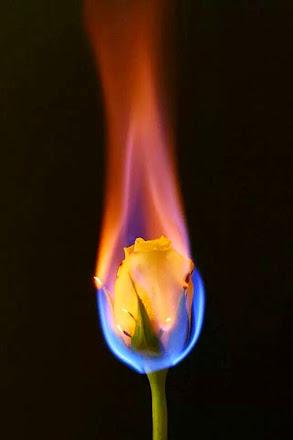 Flor en llama