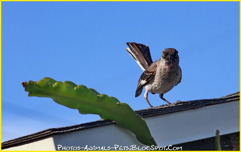 http://3.bp.blogspot.com/-7FueUTbw6Zs/Tt-PyLOpWQI/AAAAAAAACj4/17xaZ8kL3vk/s1600/wild%2Bbirds%2Bpictures.jpg