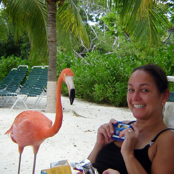Exciting flamingo encounter on a beautiful private island in the southern Caribbean Island of Aruba