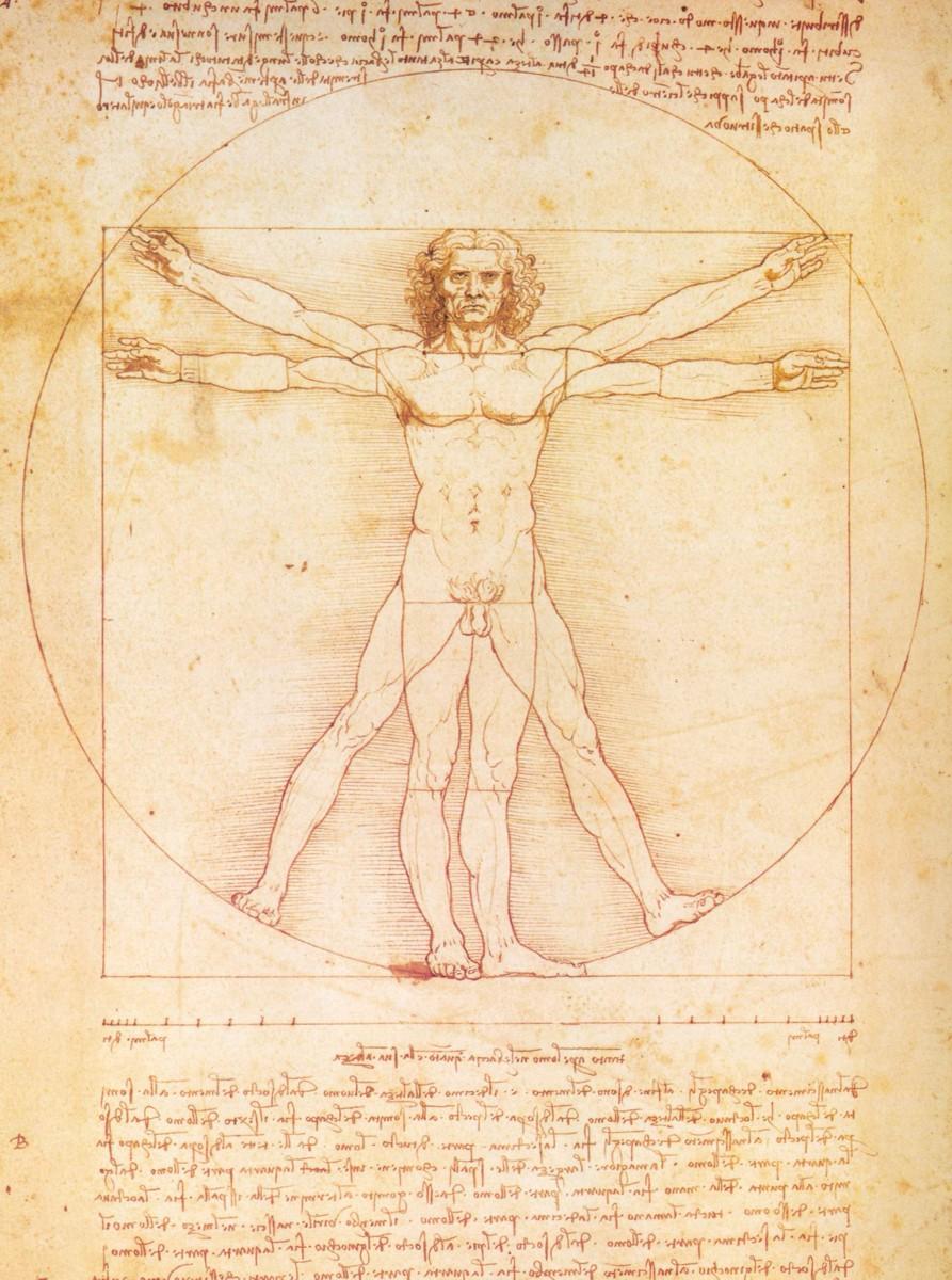 Atractivo El Hombre Da Vinci Anatomía Ilustración - Imágenes de ...