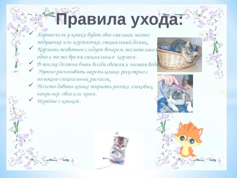 Как сделать проект мои домашние животные
