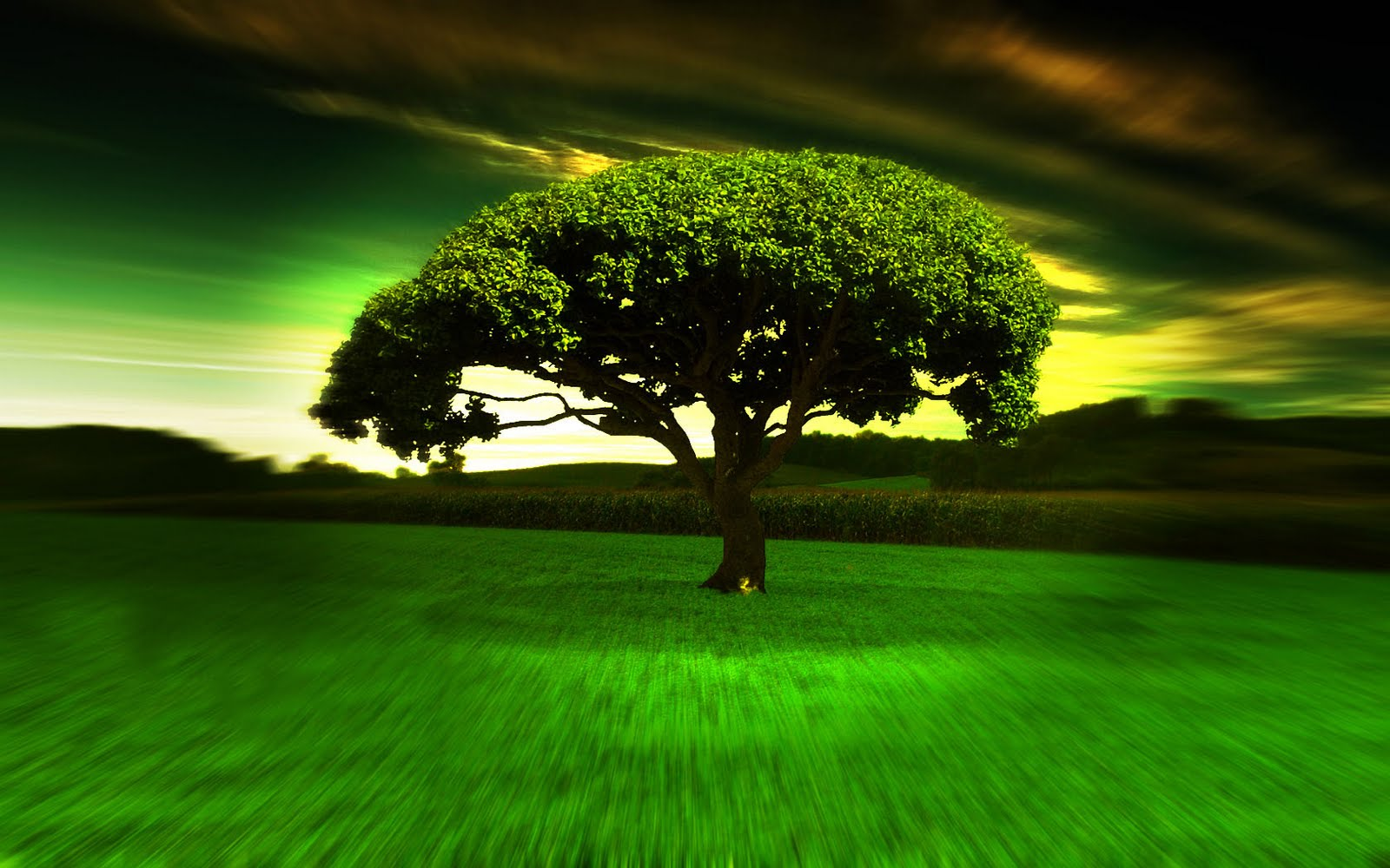 Hypno Tree Hd Widescreen Wallpapers