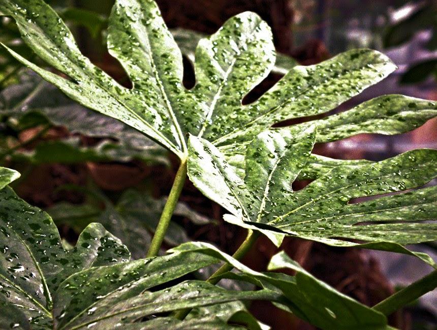 frunze gradina botanica iasi