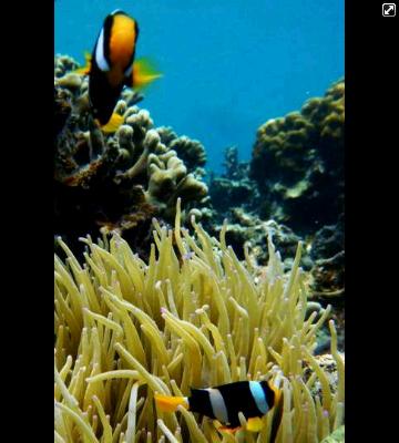 Pemandangan bawah laut Pulau Tegal - Dokumentasi Lampung Snorkel