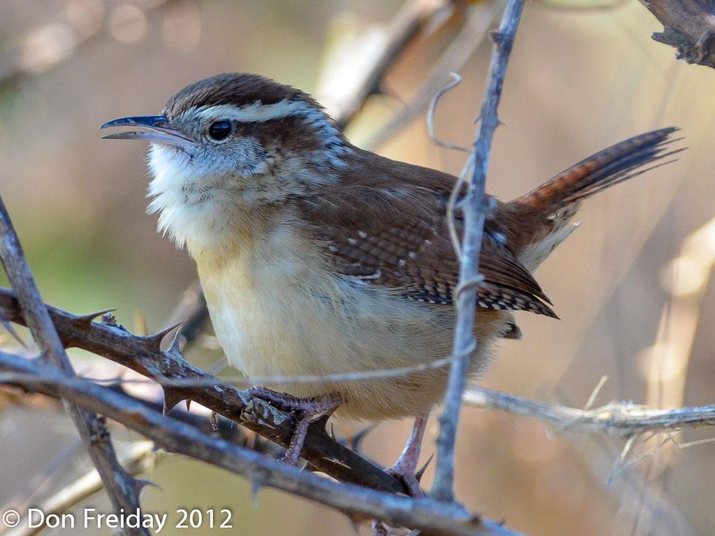 The Freiday Bird Blog: November 2012