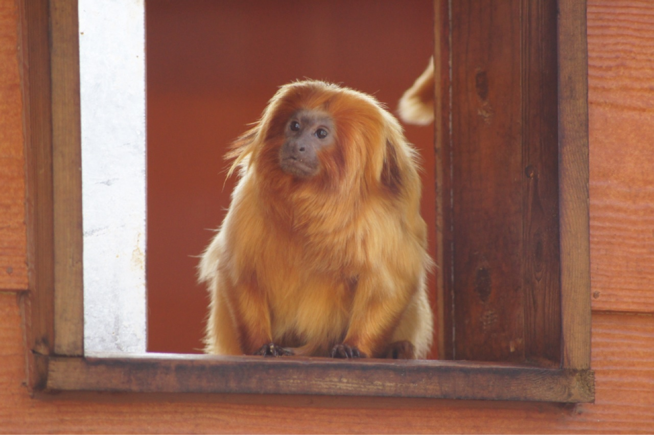 Royalty free monkey image