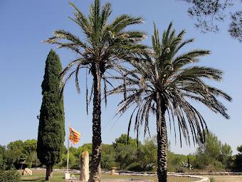 CAMPAMENT DE BINIPARRATX (SANT LLUÍS)