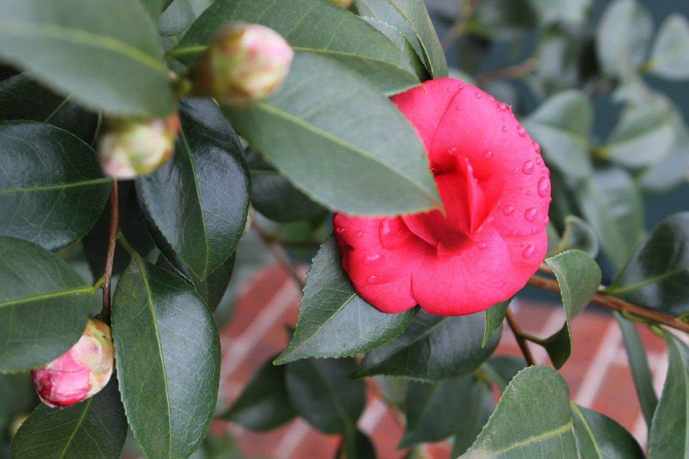 Gardening Tips For Small Spaces Winter Blooming Flowers