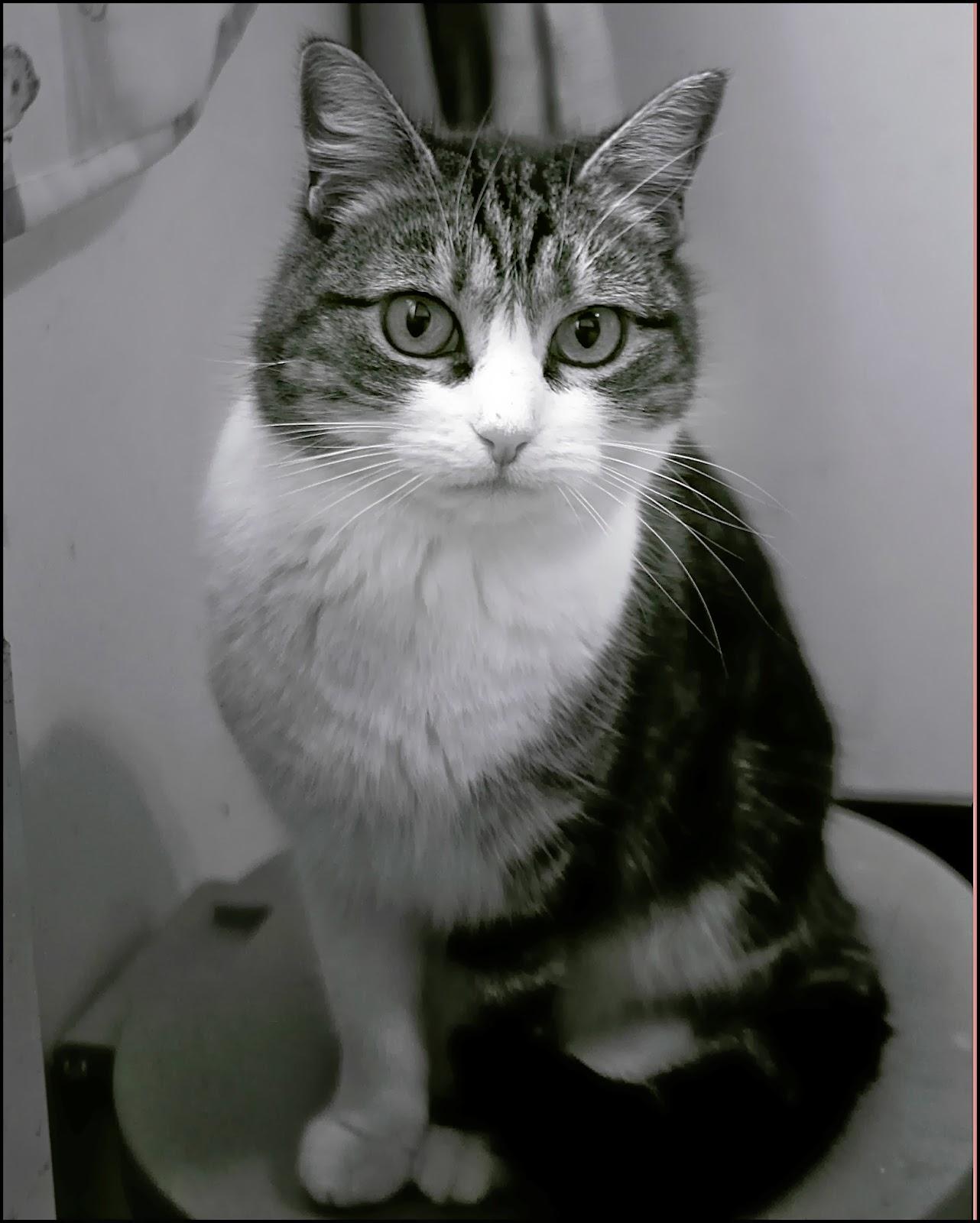 Traits de plume et clins d 39 oeil le chat qui allait son for Miroir qui tombe tout seul