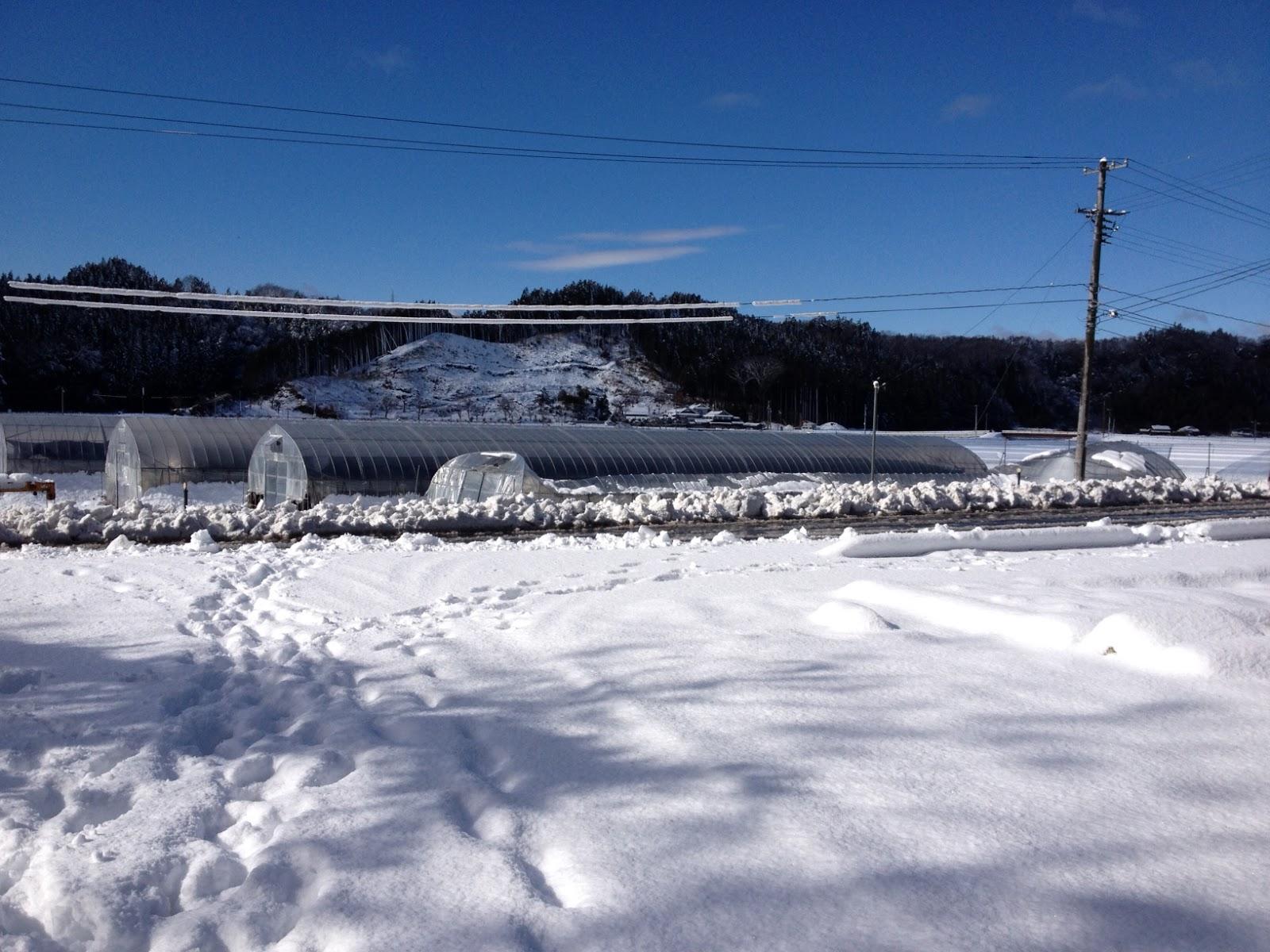 雪に潰されたビニールハウス