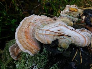 http://toivonvintilta.blogspot.fi/2015/10/parasta-syksyssa.html