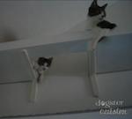 Fabriquer un arbre chat parcours mural pour chats - Parcours mural pour chat ...