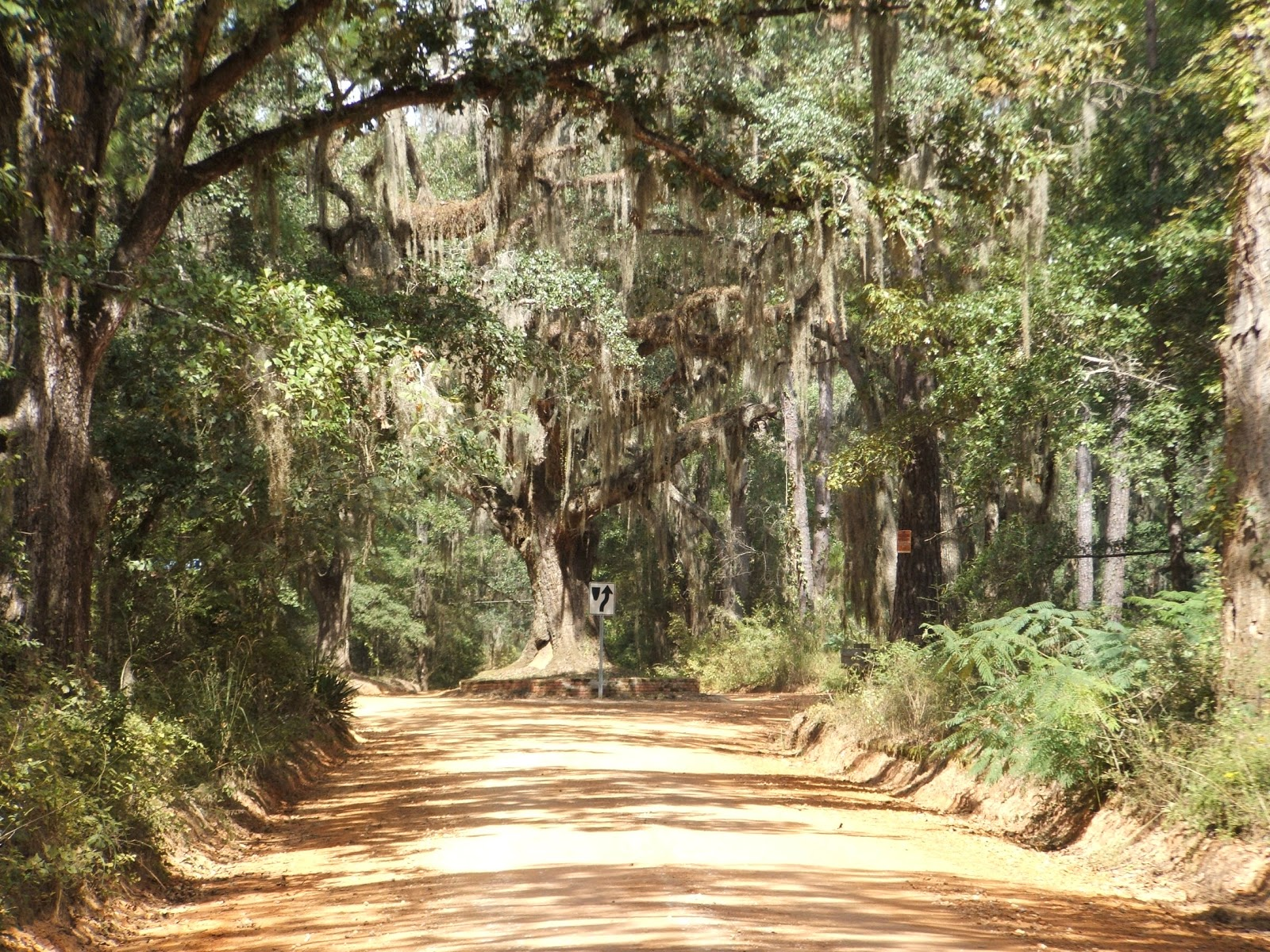 THE COTTON TRAIL Canopy Road Automobile Tour & Rediscovering Florida: CANOPY ROADS u0026 COUNTRY LANES u2013 The Canopy ...
