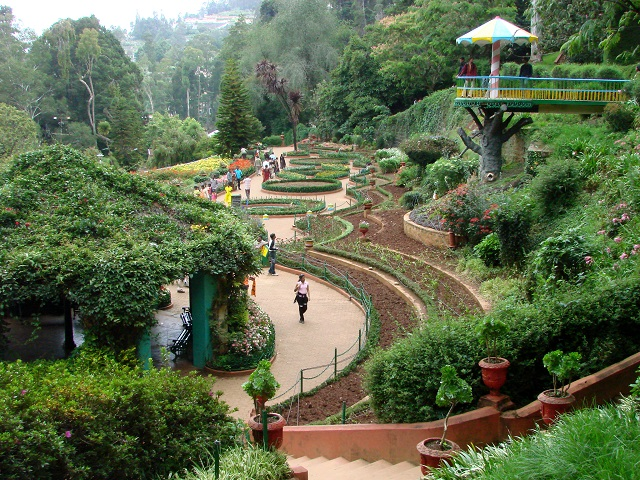 Government Botanical Gardens, Ooty