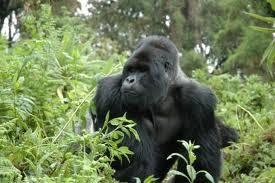 teen tour uganda rwanda