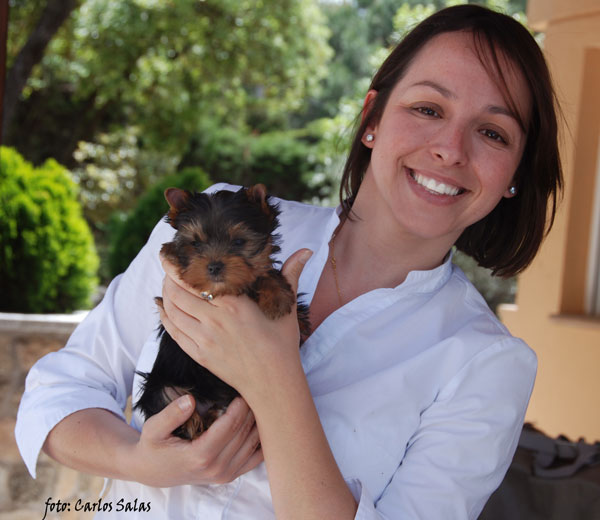La Villa Y Corte Yorkshire Terrier