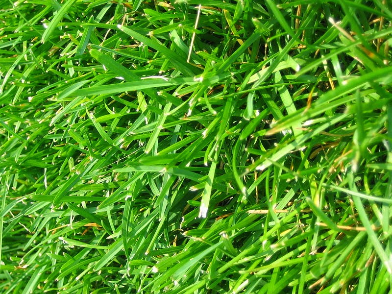 Image: Grass is in the Public Domain. http://commons.wikimedia.org/wiki/File:WIKI-Grass.jpg
