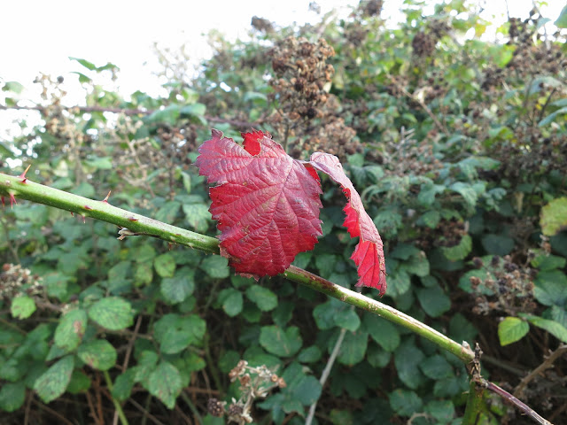 Two, uniformly red, leaves in the gathering gloom.