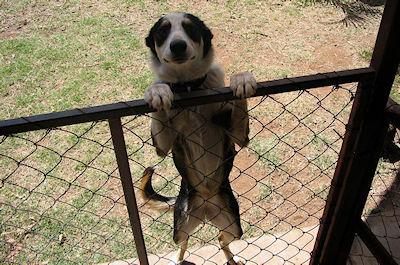 Fifi Dog Name