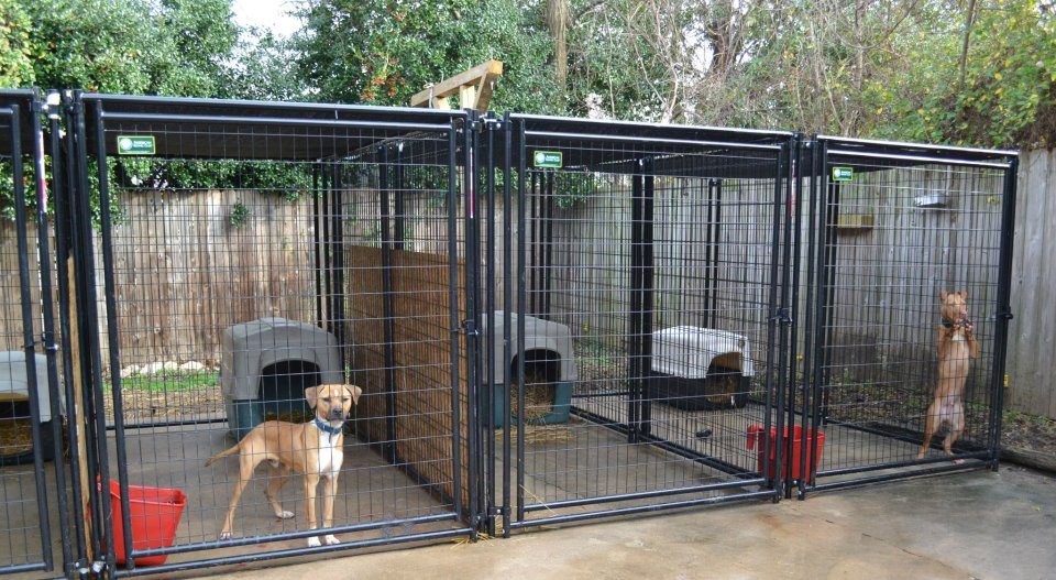The real apbt september 2015 for Building dog kennels for breeding