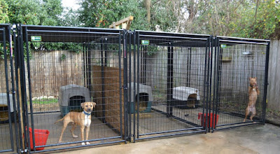 The real apbt dog kennel setups and designs for Indoor outdoor dog kennel design