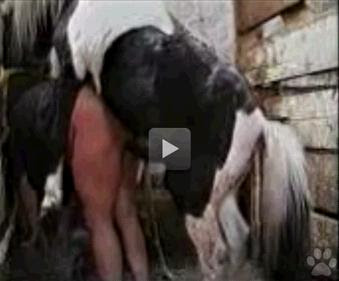 Cavalo Arrombando A Buceta Da Loira Seo Cavalos Videos E