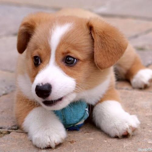 Gambar Anjing Cute