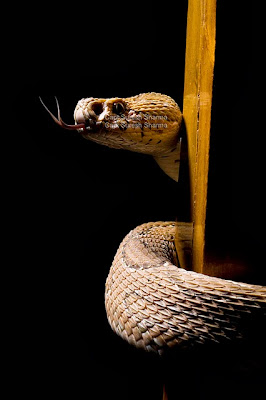 snake photography tips