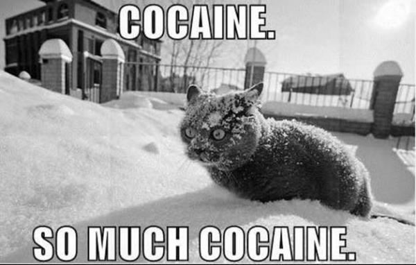 confused+cat.jpg