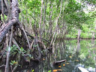 Hochwasser im Wald